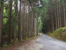 Hanase - Mountain Road 1